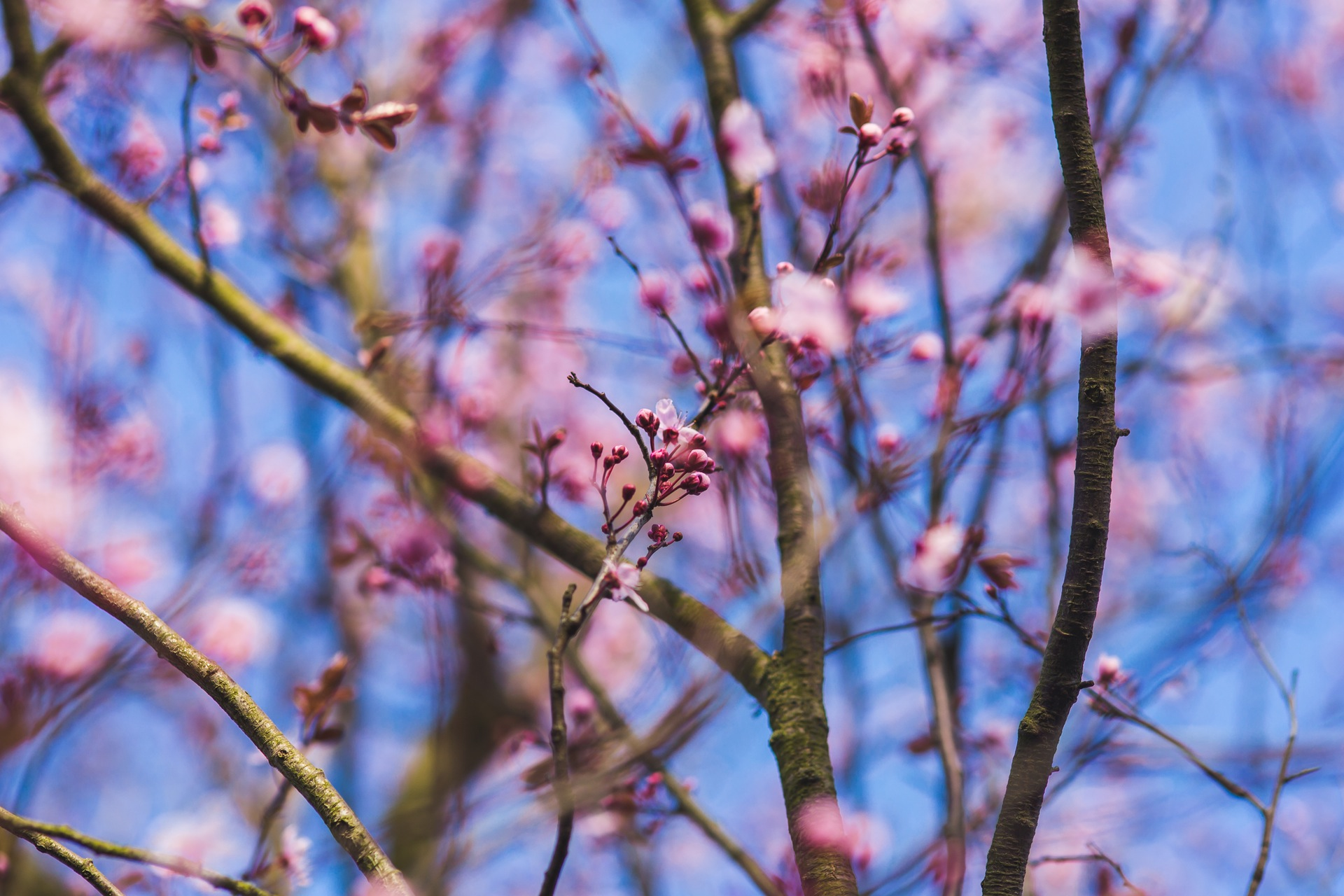 nature-flowers-los-angeles